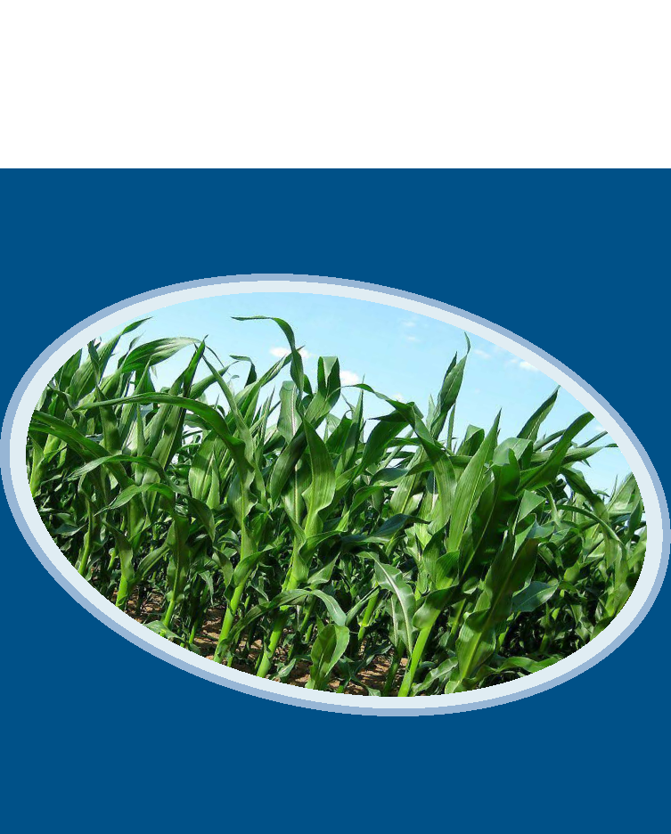 Corn Seed China Monthly Report