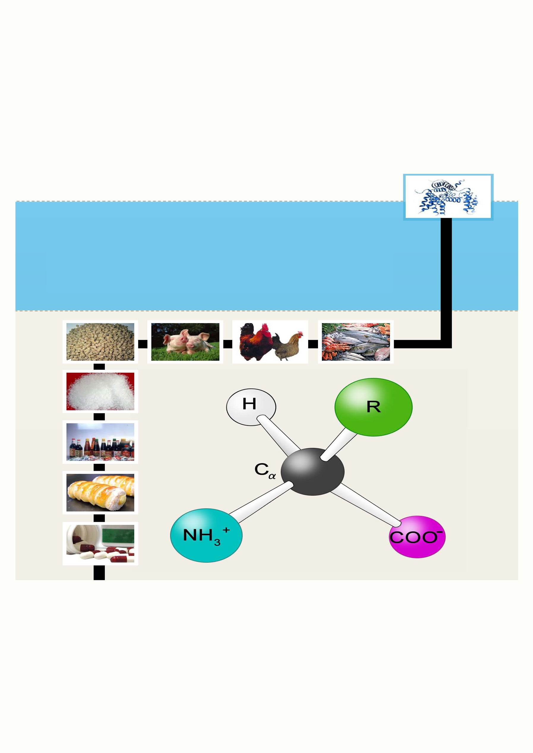 Amino Acids China E-News